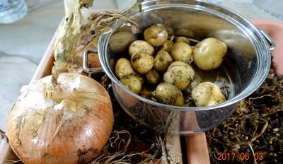 タマネギジャガイモ