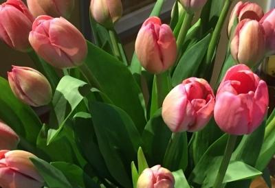 tulip07302017.jpg
