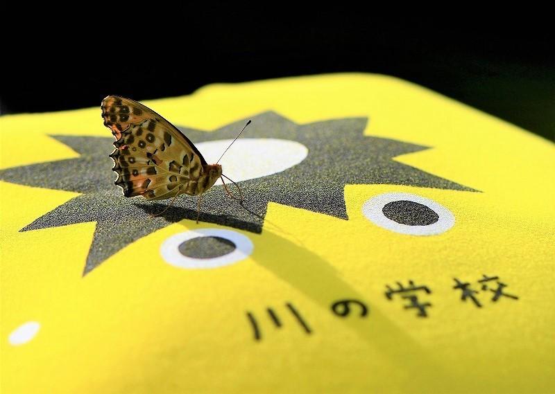 ヒョウモン蝶1