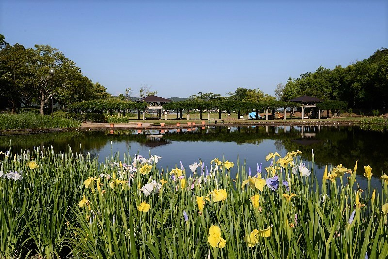 あやめ池公園2
