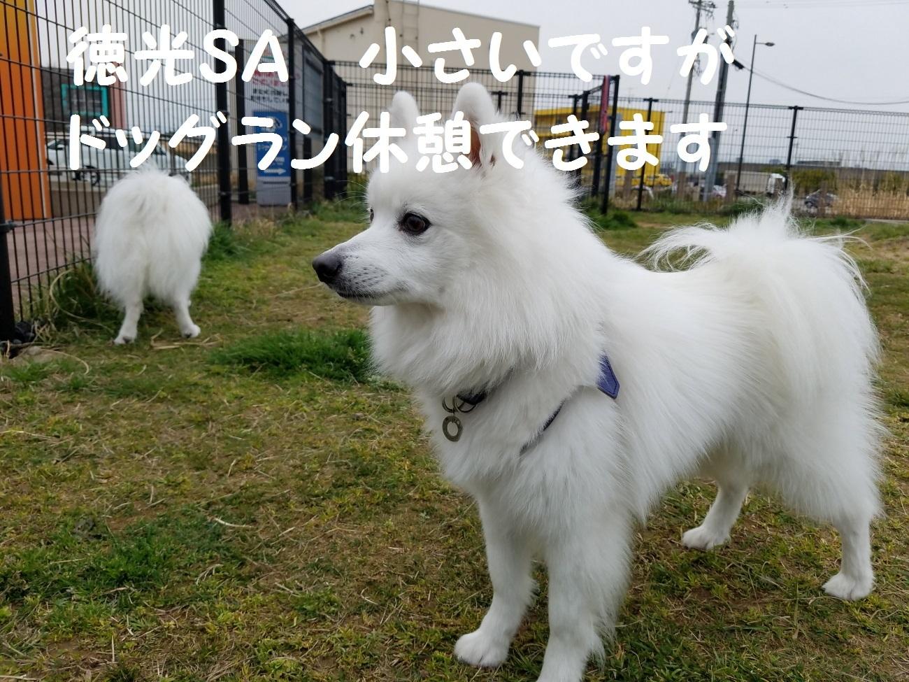 20170331_065156.jpg
