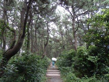 8/18 平塚海岸防砂林の遊歩道