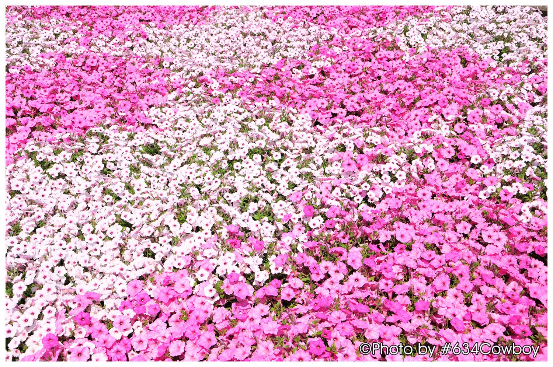 フラワーパークに咲いていた花 その1 写真