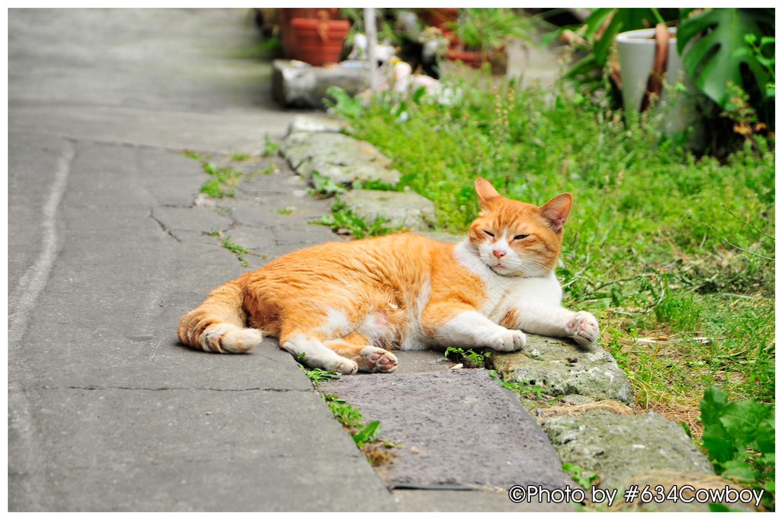 築地の長老猫 写真
