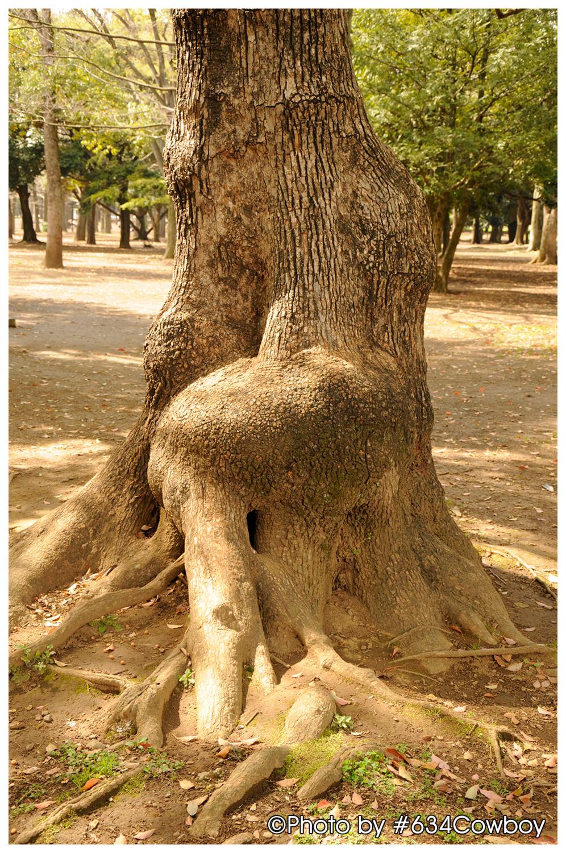 樹の根元 写真