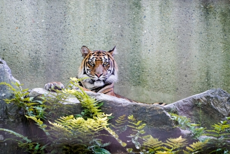 higashiyama_zoo_25.jpg