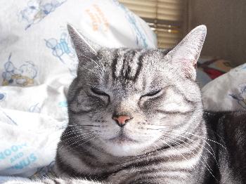 ここ涼しい寝落ち寸前3