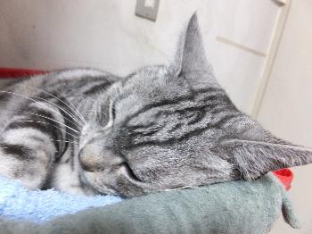 ネズミさんを枕に1