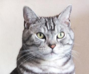 猫の上ににゃんこ2