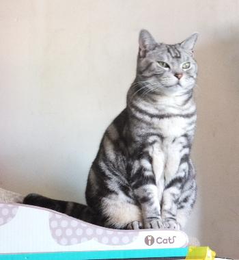 猫の上ににゃんこ