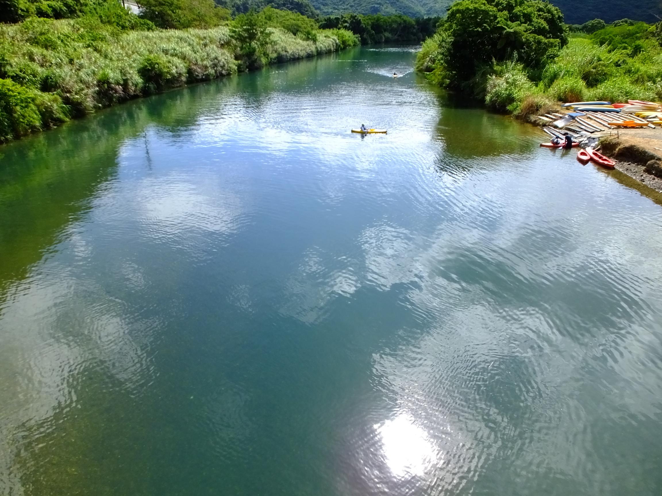 マングローブ原生林満潮・奄美大島