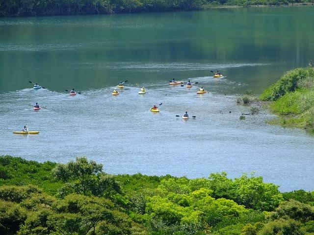 マングローブ原生林でカヌーツアー