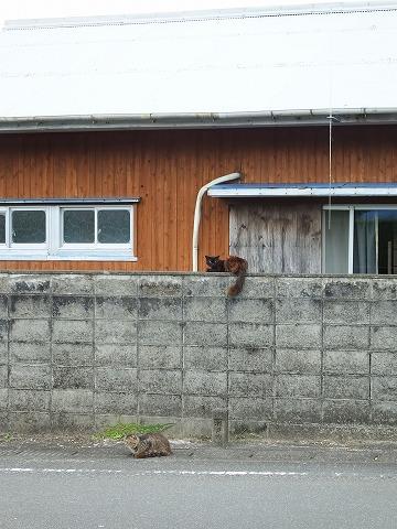 諸鈍集落の猫