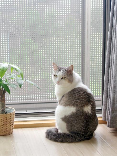 嵐を聞く猫