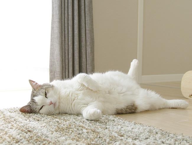 猫は加齢で股開く?
