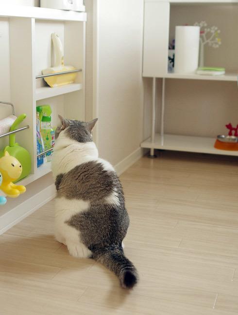 困る猫見てなんだか困る