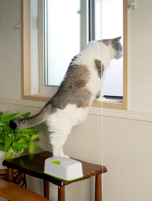 猫の鼻は忙しい