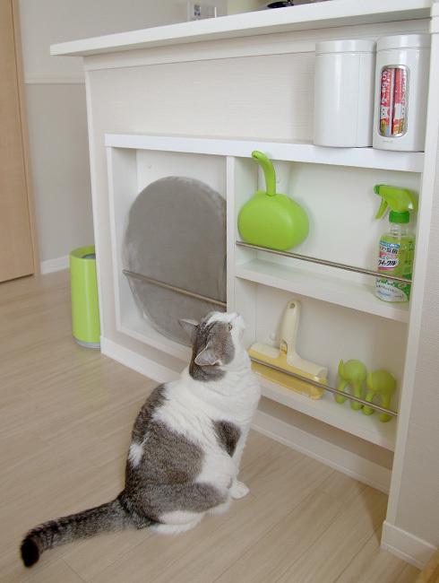 猫に景気づけの一本