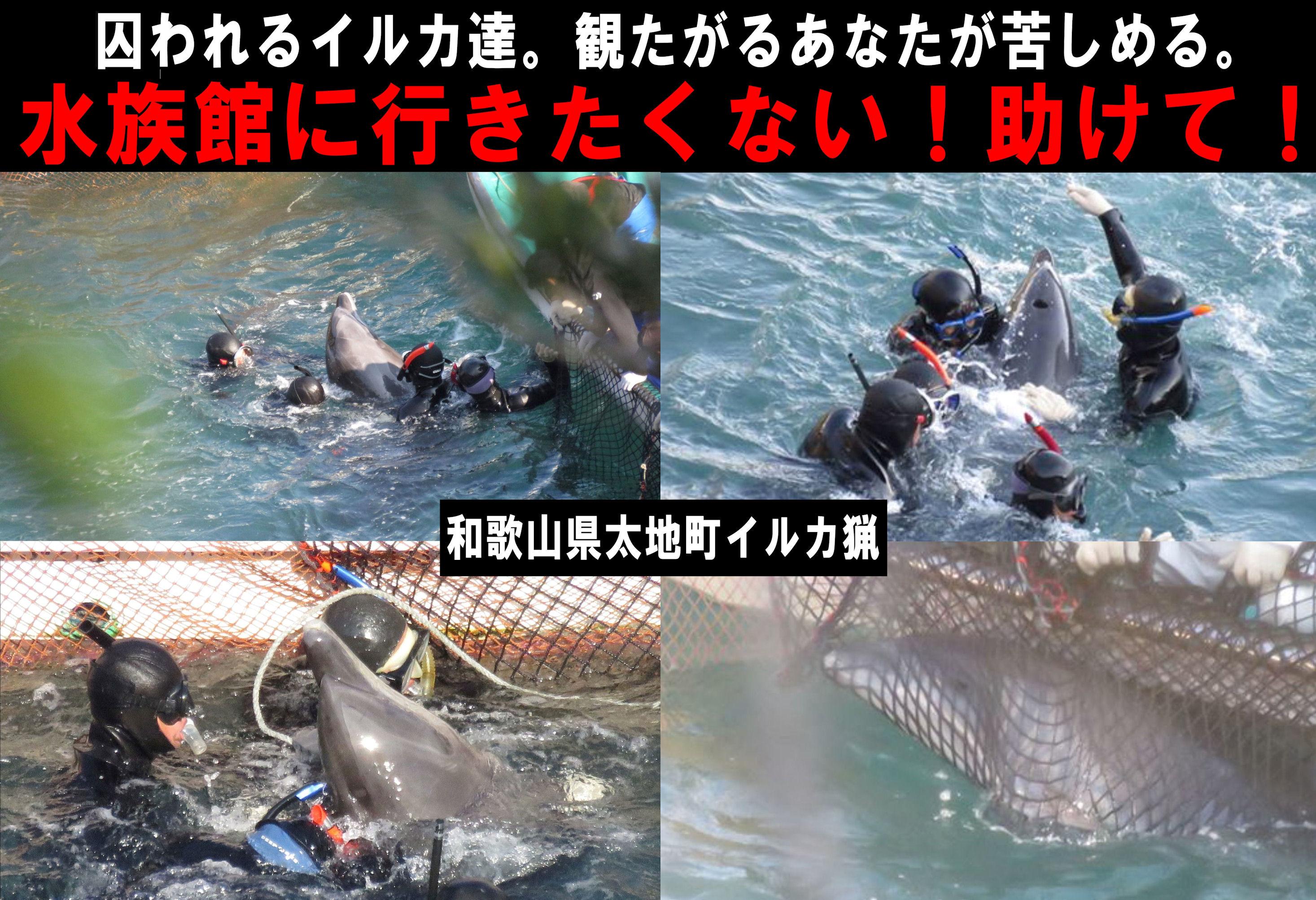 dolphins5a.jpg