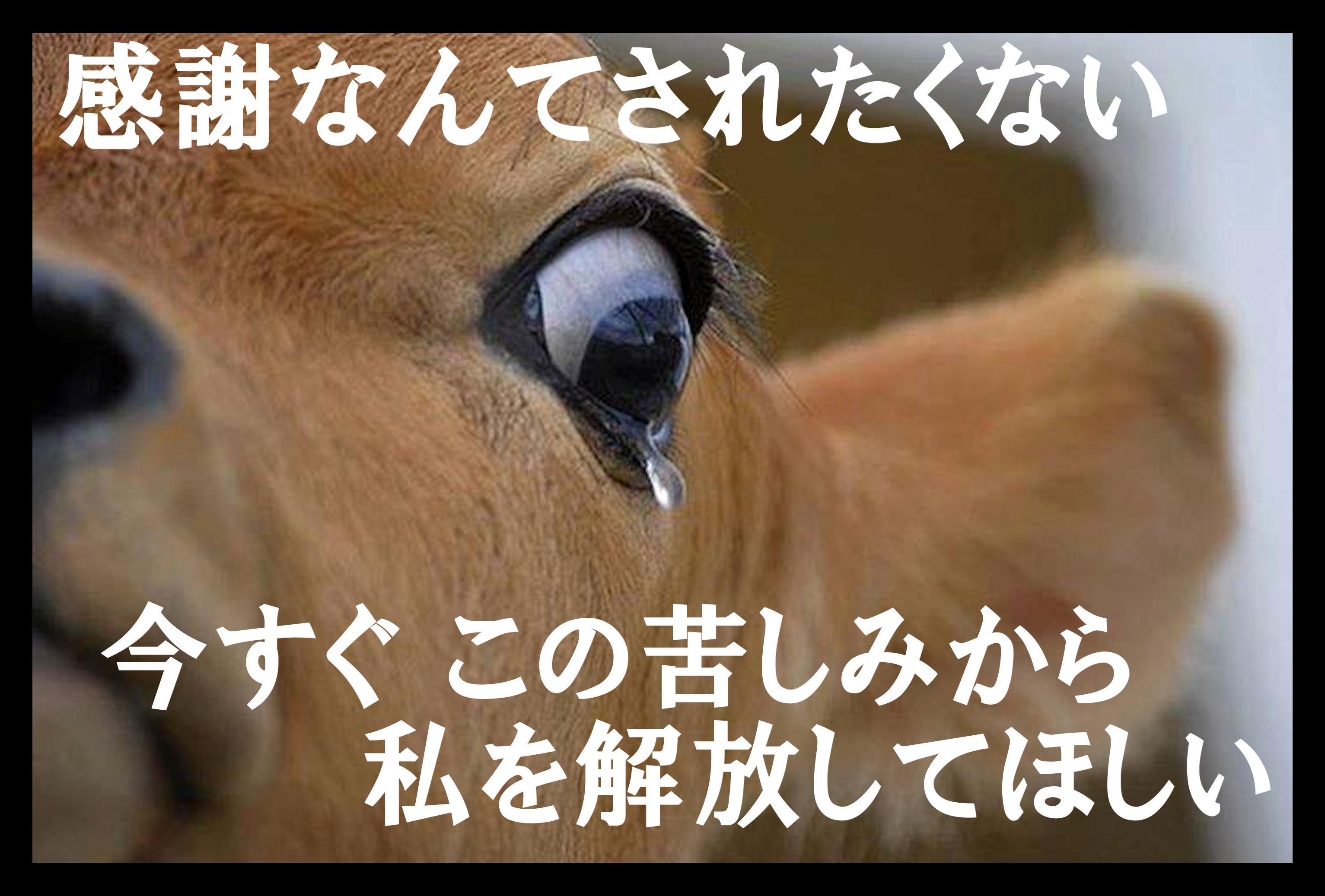 usinamidaP4.jpg
