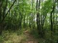 五月の森の道