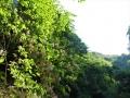 谷空木の谷