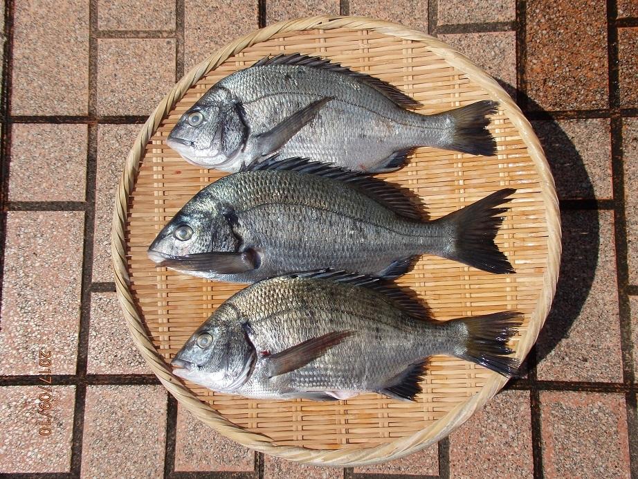 20170909ウキ釣り釣果カイズ