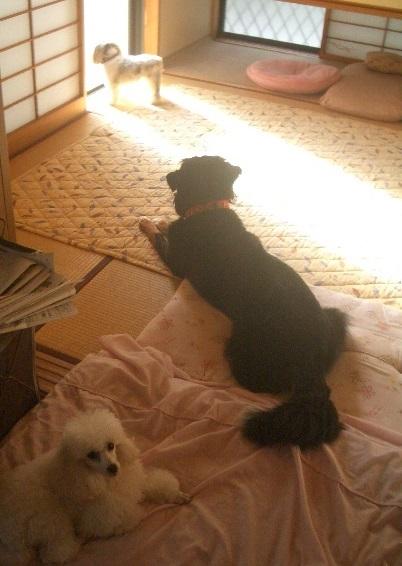 アリ&エミ&ユキ