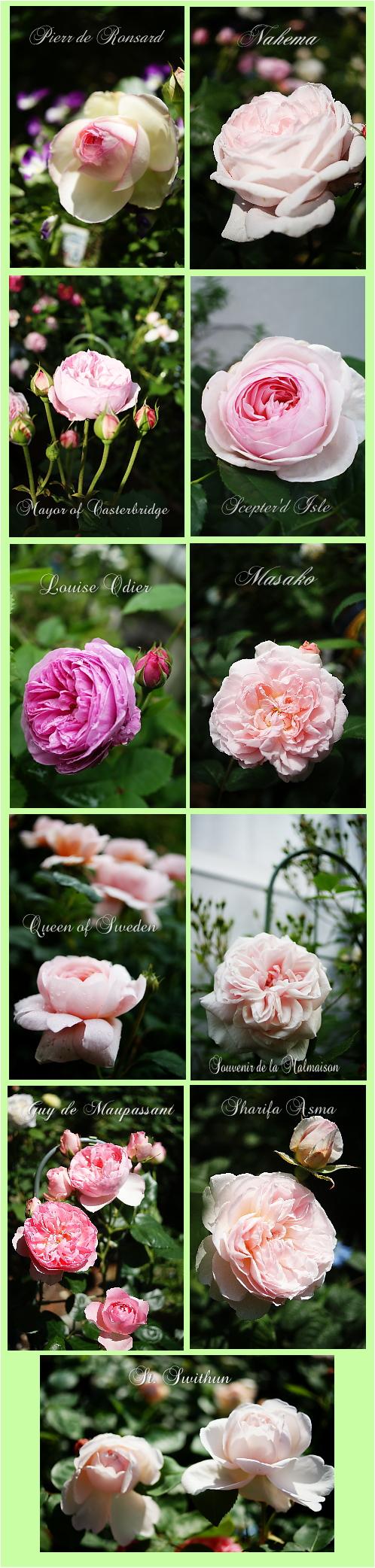 5r-pinkroses.jpg
