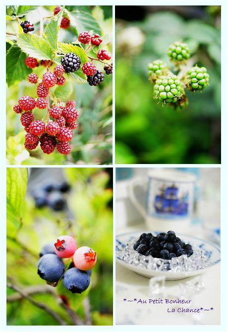 7g-berry.jpg