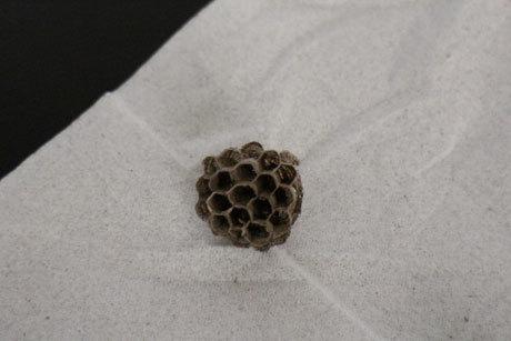 蜂の巣って感じ