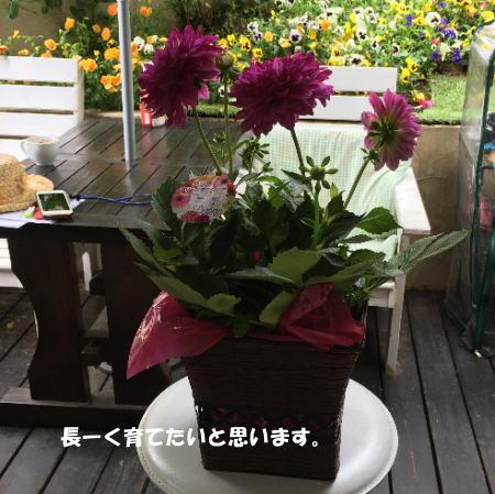 2017-05-14_12.jpg