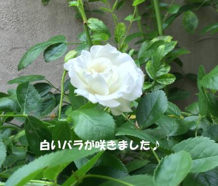 2017-05-16-3.jpg