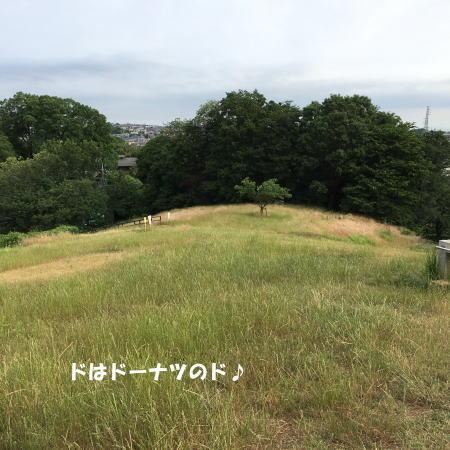 2017-06-12-5.jpg