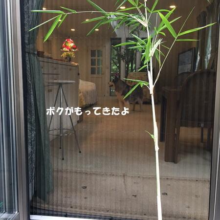 2017-07-01_1.jpg