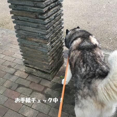 2017-09-01-2jpg.jpg