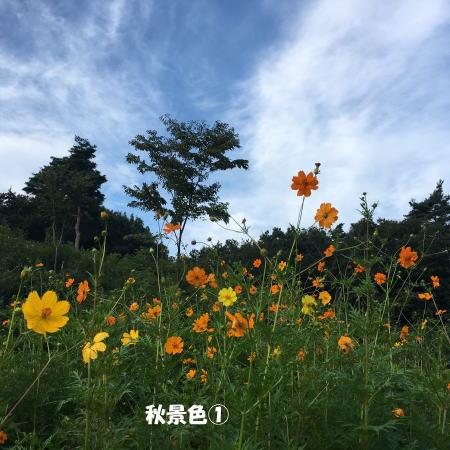2017-09-10_1.jpg