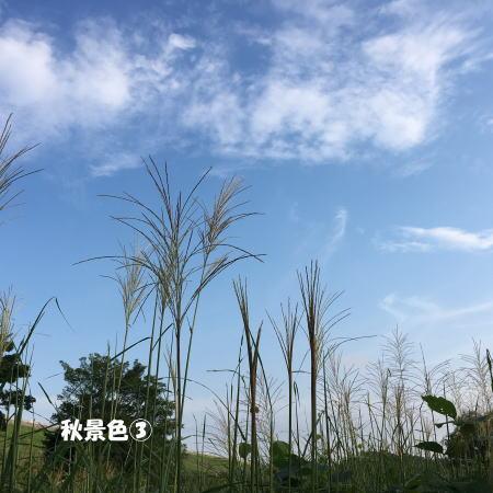 2017-09-10_3.jpg