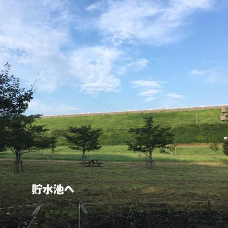2017-09-10_4.jpg