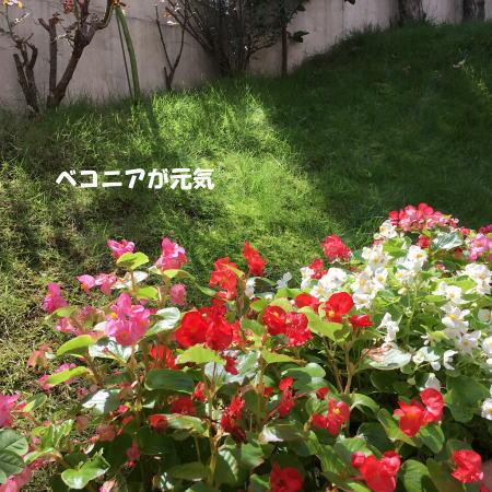 2017-09-10_7.jpg