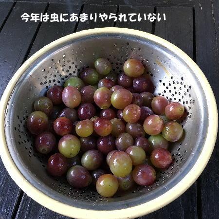 2017-09-21-5jpg.jpg