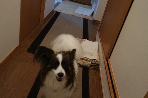 ルークのトイレ