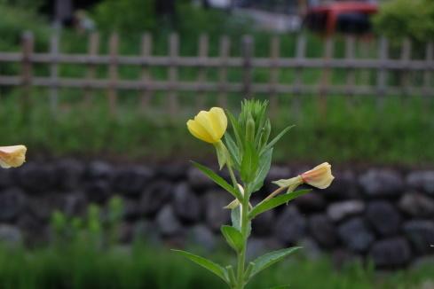 170803-1.jpg