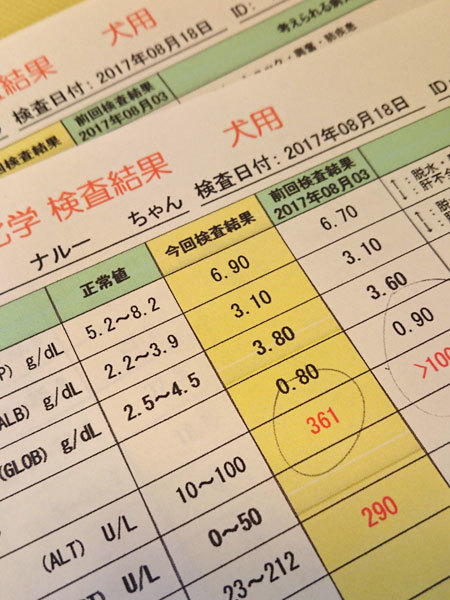 20170818ナルーちゃん病院