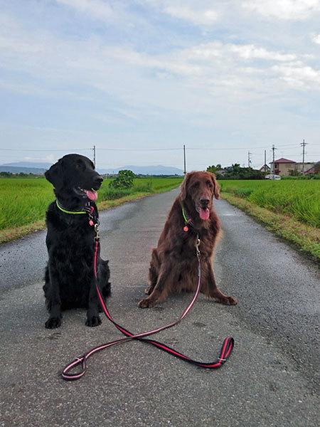 20170826お散歩