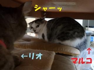 blog170601_1.jpg