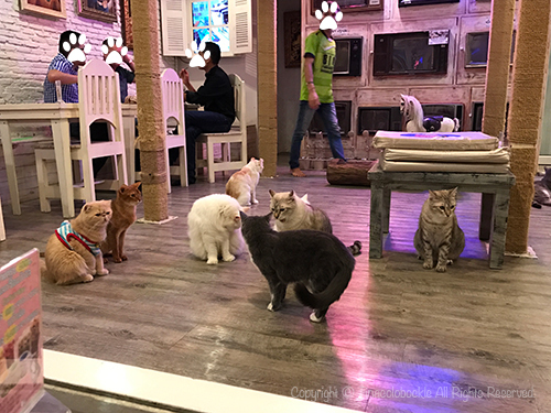 201705CATURDAY_CAFE_BKK-10.jpg