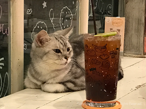 201705CATURDAY_CAFE_BKK-13.jpg
