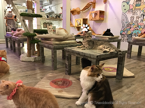 201705CATURDAY_CAFE_BKK-14.jpg