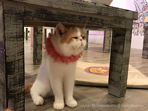 201705CATURDAY_CAFE_BKK-7.jpg